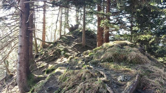 Waldidylle beim Heuberg